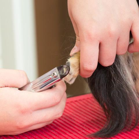 シャンプー前に爪切り、耳毛抜き、耳そうじ、入念なブラッシングを行います。